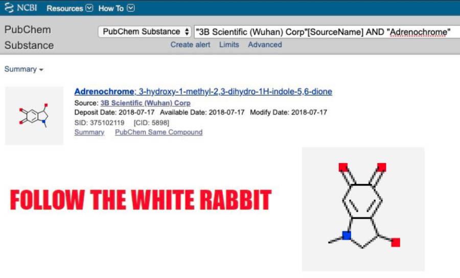 whyte-rabbit